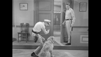 The Andy Griffith Show: Season 5: Barney's Bloodhound