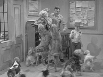 The Andy Griffith Show: Season 3: Dogs, Dogs, Dogs